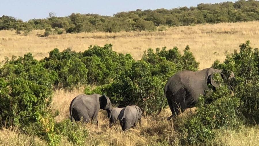 Maasai Mara Family trip