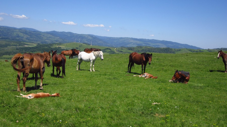 Horse Riding - Tours in Brasov