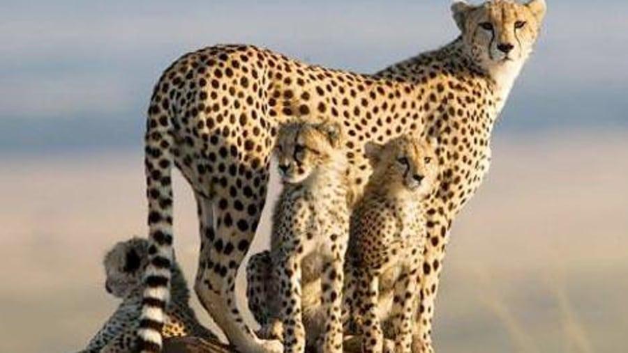safaris photos