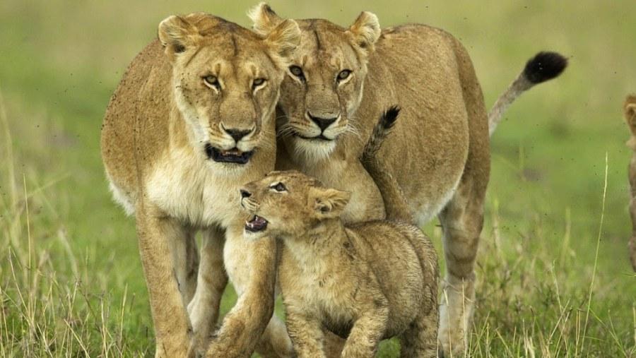Kenya Safari Deals