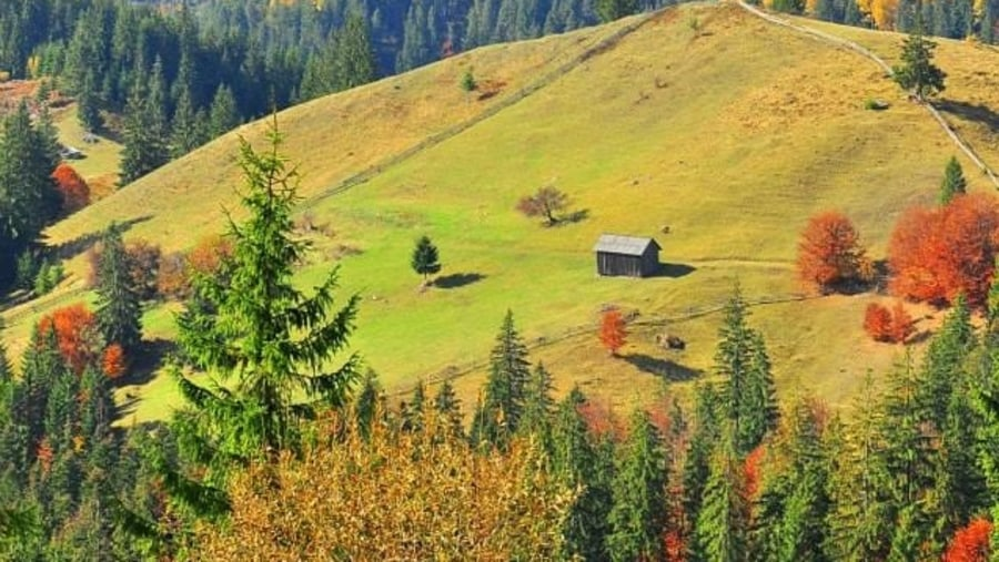 Bucovina views