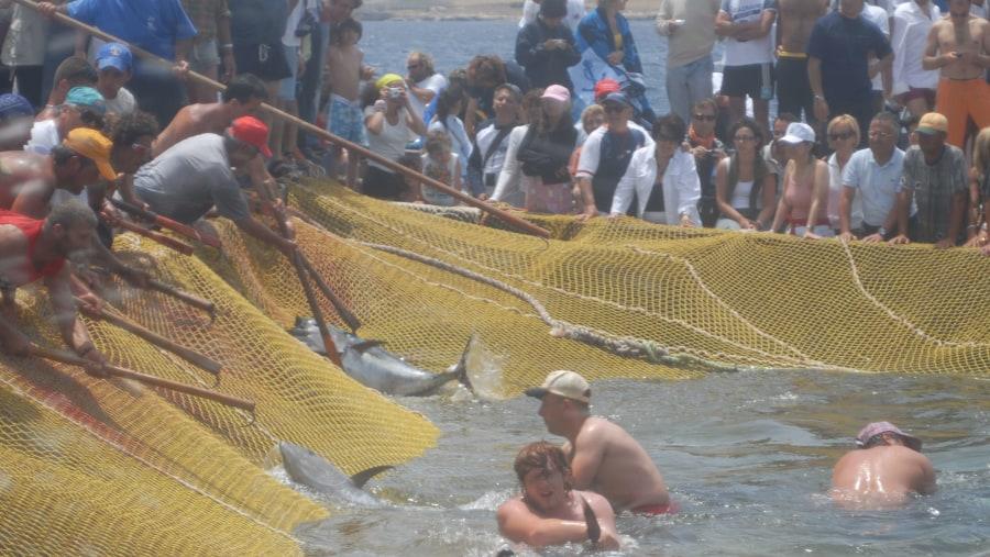 La MATTANZA dei tonni a FAVIGNANA
