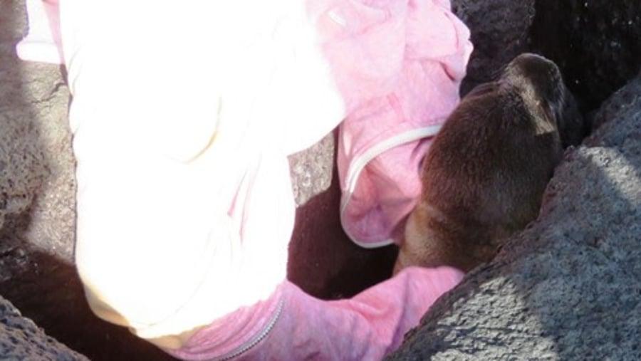 Saving baby sea-lion