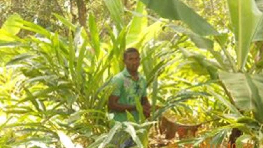 A Spice boy in the midst of cardamons, banana plants and jack fruit trees