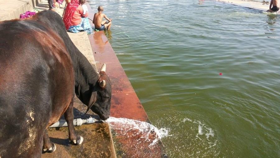 Ghat-Holy Lake Pushkar