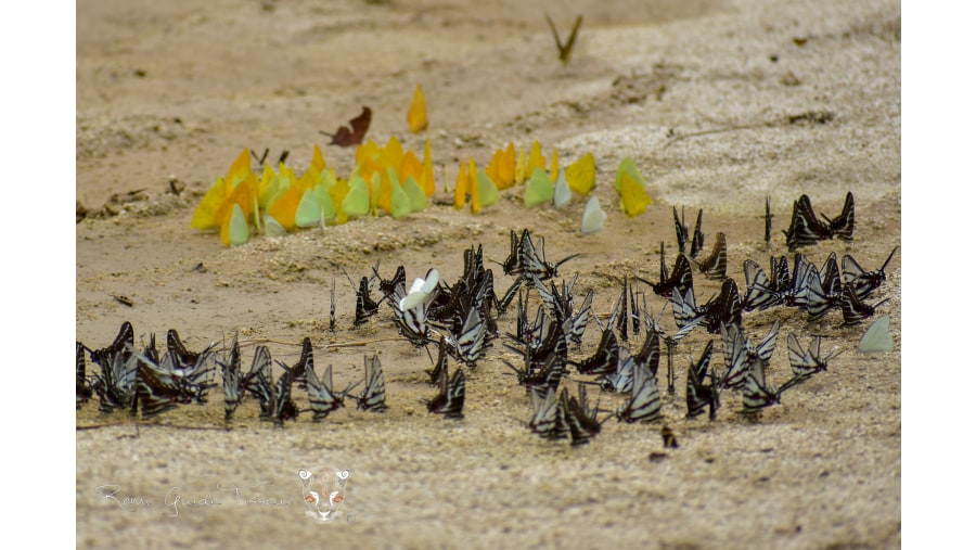 Butterflys taking some water on a sunny day