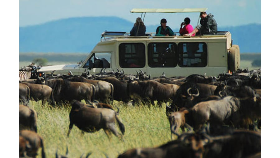 Wildebeest Migration Safari