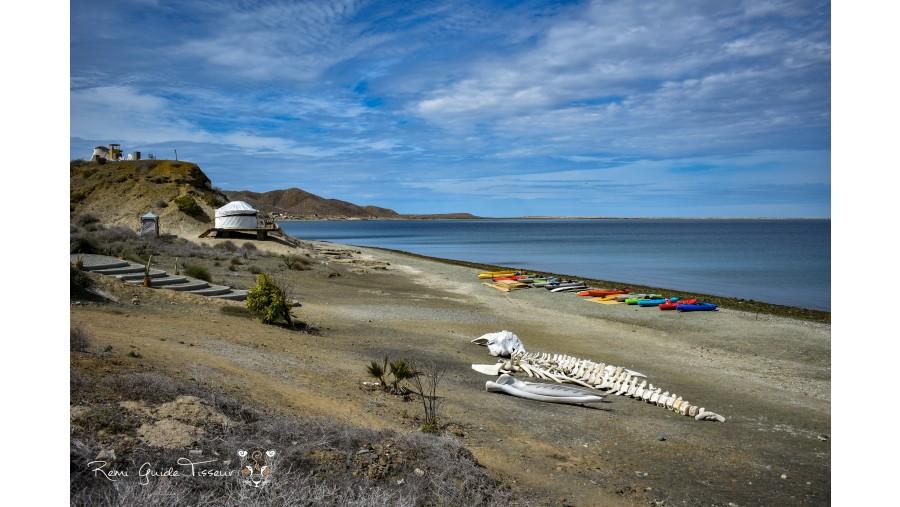 Bahía Magdalena,Baja California