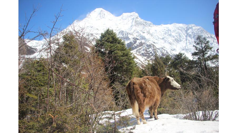 Manasalu Trek #nepaltrekkers