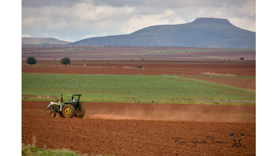 Red soil landscapes in Zacatecas