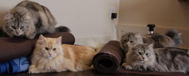 Les chatons attendent impatiemment le début du cours.