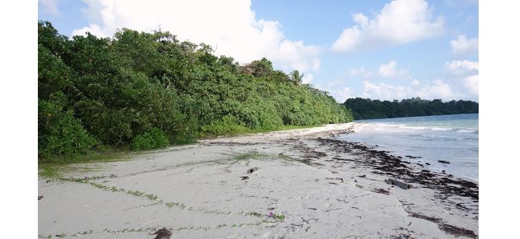 merk-bay-beach