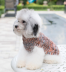 Gebreide trui gemengde kleuren voor de hond