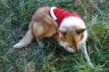 Gebreide kerst trui rood met wit voor de hond