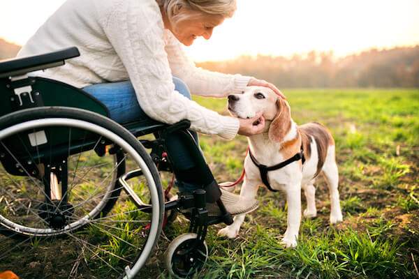 A woman uses a wheelchair while petting a dog outdoors