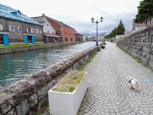 小樽運河をワンコとお散歩