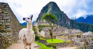 Top 5 Foods to Eat in Cusco, Peru