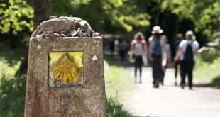 Shell sign marks the way for pilgrims walking and tasting the Camino de Santiago through Northern Spain