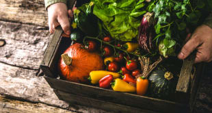 Example of organic food in Brisbane. Farmer holding recently harvested organic vegetables in a wooden box.