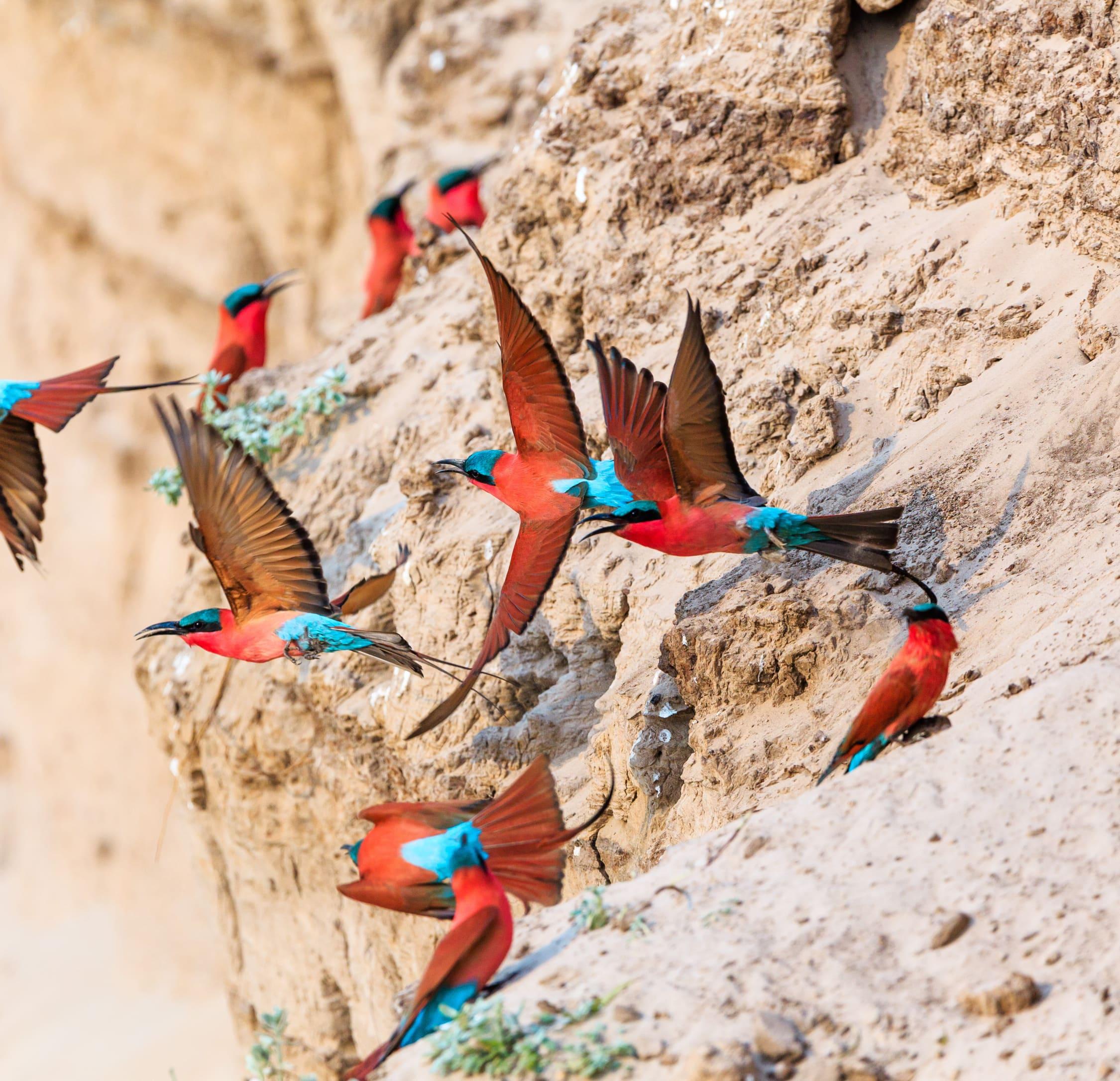 Simbabwe.Birds