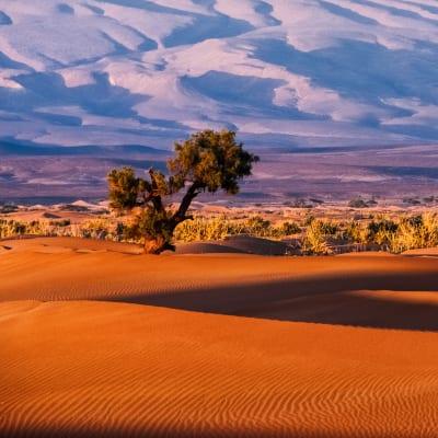 Aus der Heimat in die Welt: Von Marokko aus erkundete Zolatis seinen heimischen Kontinent