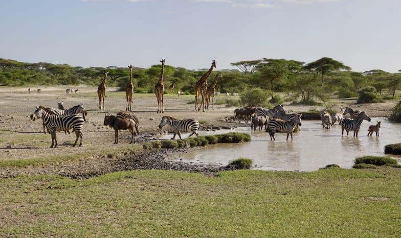 Serengeti Savanne