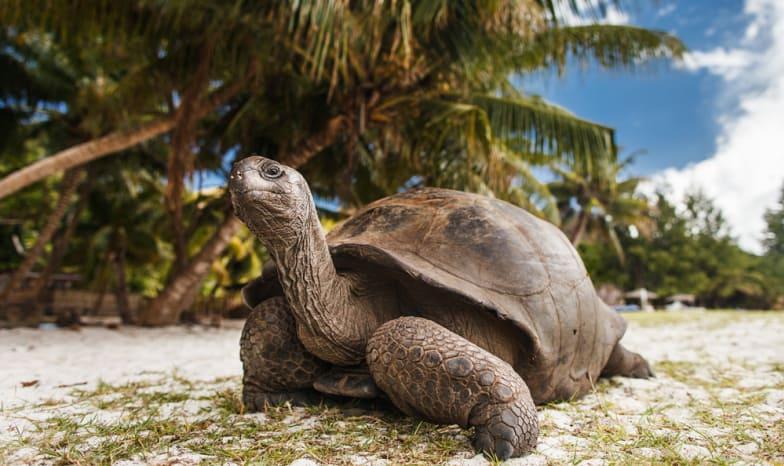 Seychellen.Curieuse.Riesenschildkröte