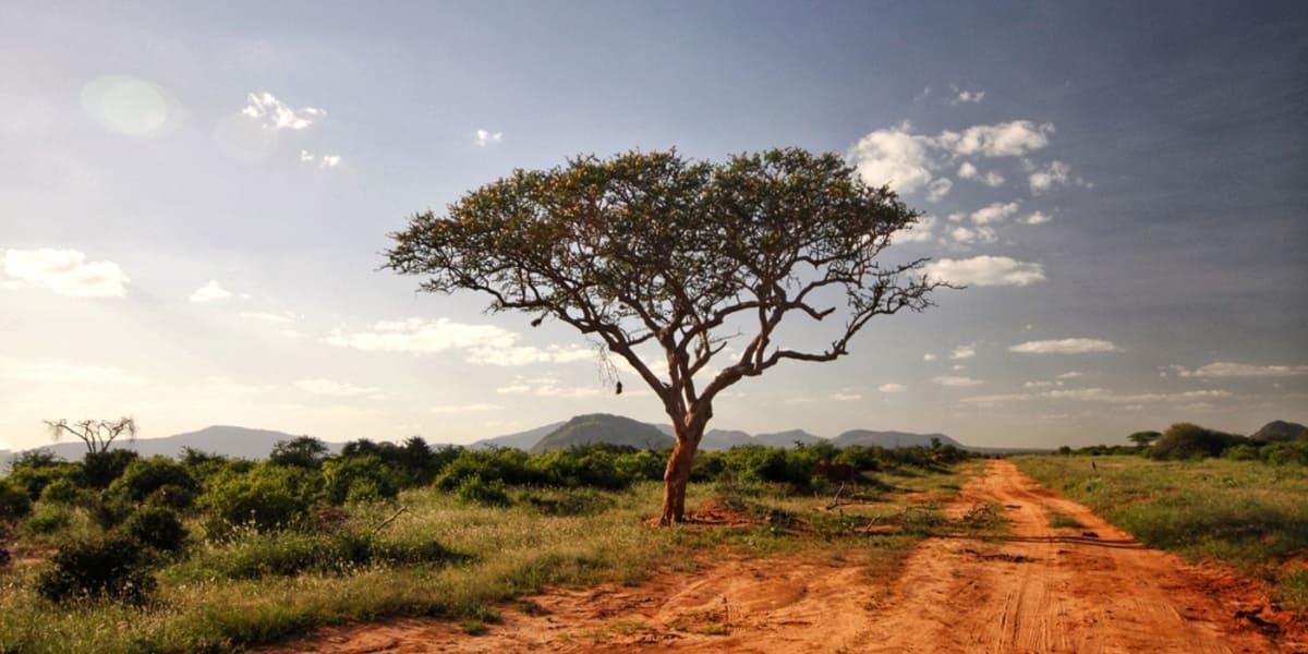 Im 20 Jahre alten Auto ohne Klima durch Afrika. Verrückt? Nicht, wenn man zum Tee bei der Queen erwartet wird