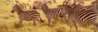 Reisethemen.Safaris