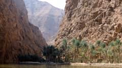 OM.Wadi Shab 3