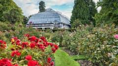 NZ.Christchurch_Botanic_Garten