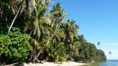 CR.Cahuita Nationalpark Strand