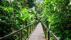 CR.Cahuita Nationalpark