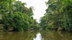CR.Nationalpark_Tortuguero_Fluss