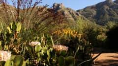ZA.POI.Tafelberg 1