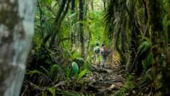 CR.Nationalpark Corcovado Wanderweg