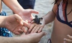 LK.Turtle_kids