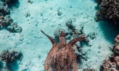 LK_turtle