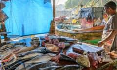 Fischmarkt Galle Sri Lanka