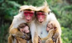 LK.monkey