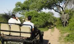 SAZ.KrugerNP.Elefant.Safari