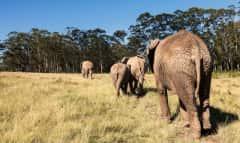 Elefanten im Busch