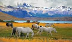 Patagonien besteht aus verschiedenen Provinzen der beiden Länder Argentinien und Chile, ist aber nicht fest abgegrenzt.