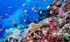 LK_Unterwasserwelt