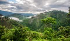 Bwindi Nationalpark