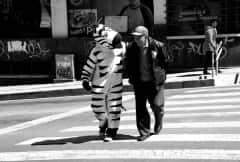 BOL.Magazin.Zebra
