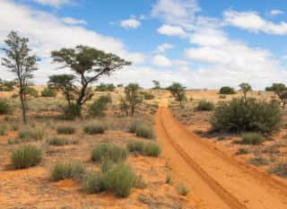 BWA.Kalahari.Landschaft