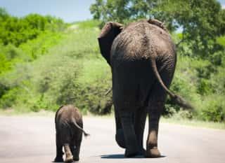 ZAF.Port Elizabeth.Addo Elephant NP