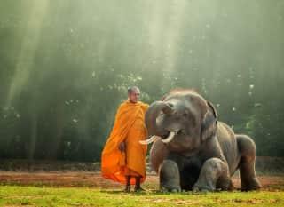 LAO. monk. baby elephant