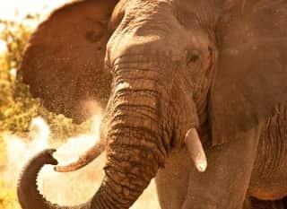 Südafrika Elephant
